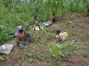 IRAD Cameroon image